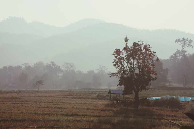 Foggy Morning Mountains Landscape Trees Outdoors No People Calm Fall Season Nature Countryside Autumn in North Thailand South East Asia