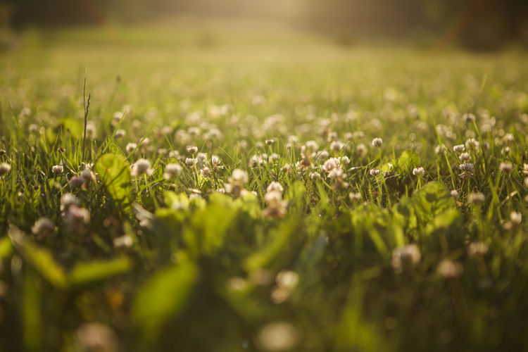 Beauty In Nature Day Farm Field Fragility Freshness Green Color Growth Large Group Of Objects Nature Scenics Selective Focus Surface Level Tranquil Scene Tranquility