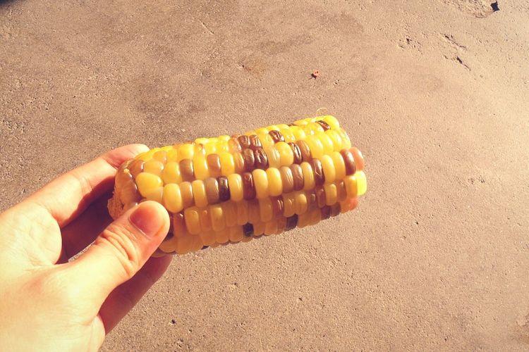 multi-colored corn 🌽 Farm Life