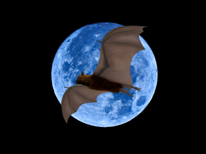 Astronomy Black Background Blue Cloud - Sky Digital Composite Globe - Man Made Object Indoors  Nature Night No People Planet - Space Planet Earth Science Shape Sky Space Sphere Studio Shot