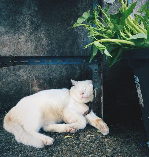 Cat sleeping by plants