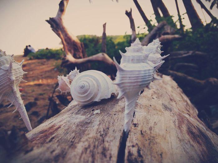 Nikon D5100  I LOVE PHOTOGRAPHY Vscocam Seaside