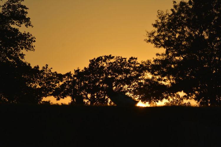 Bursting Sunset