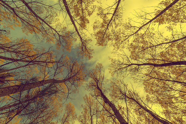 Bad weather mood. Autumn Colors In Provence Autumn Colors In South Of France Backgrounds Beauty In Nature Branch Forest Without Leafs France 🇫🇷 Heads Up Into The Woods Of Provence Look Up Low Angle View Nature No People Scenics Sky Tree