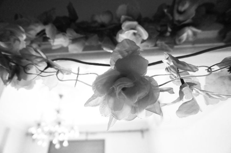 """""""Only in Art will the Lion lie down with the Limb and thec Rosé grow without the Thorn"""" - Martin Amis 🌹 Quoteoftheday Artificial Flower Hanging Flower Blackandwhite Monochrome Shades Of Grey Black Vs White Contrast MnMl Mnmlsm Minimalism Minimal Minimalistic Minimalmood Minimalist Minimalobsession Minimalart Minimalarchy Mobilephotography"""