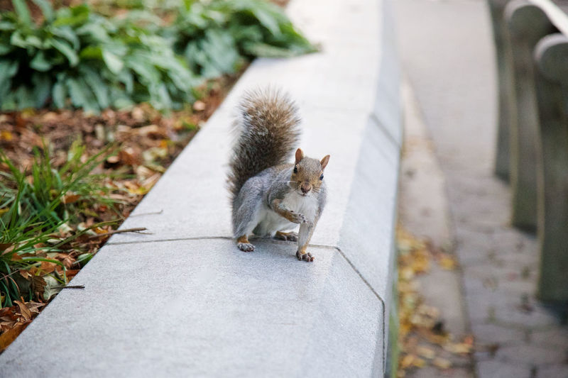 Squirrel beckons to the viewer. Animal Themes Beckoning Beckons Come To Me Come With Me Day Follow Me Mammal Nature One Animal Outdoors Rodent Squirrel Squirrels Wildlife