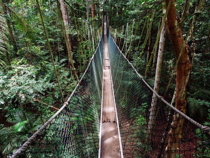 Canopy walk in taman negara national park, malaysia