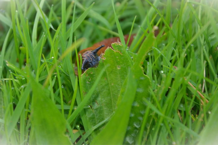 Slug Snail Bugs Nature Creatures Animal Themes Animal Wildlife Animals In The Wild Beauty In Nature Close-up Day Fragility Grass Green Color Growth Insect Leaf Nature No People One Animal Outdoors Plant