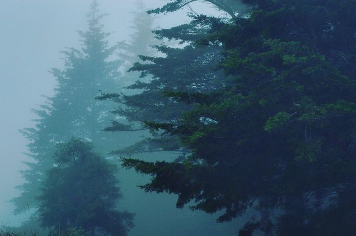 Tree Torrential Rain Nature No People Outdoors Backgrounds Winter Sky Day Beauty In Nature Close-up UnderSea Water