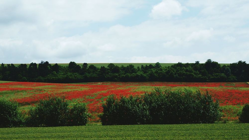 Fields Meadows Poppies  Poppy Colour Splash Red Travelling Enjoying Life Relaxing in the Countryside France Landscapes With WhiteWall
