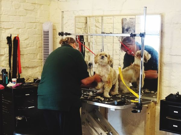 Dog Grooming Dog Groomer Hair Cut Working Hard At Work Mammal Real People One Animal Vertebrate People Indoors  Small Business Heroes Domestic Animals Women Pets