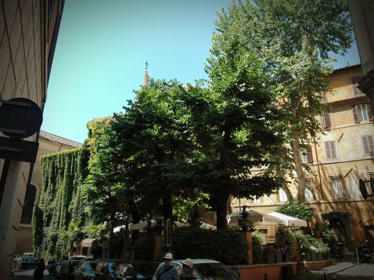 Roma Tree Day Outdoors Architecture Building Exterior City Nature My Own Photography Roma Caput Mundi Your Ticket To Europe Perspectives On Nature Moving Around Rome