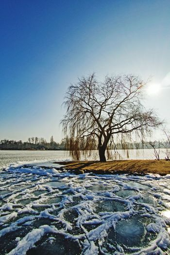 Tree Cold Temperature Snow Winter Nature Sky Bare Tree Tranquility Beauty In Nature Clear Sky Landscape No People Outdoors Tranquil Scene Schwerin Water Homeiswheretheheartis Taking Photos Beauty In Nature Walking Around Frozen Ice Hello World Schwerin Mecklenburg-Vorpommern Castle