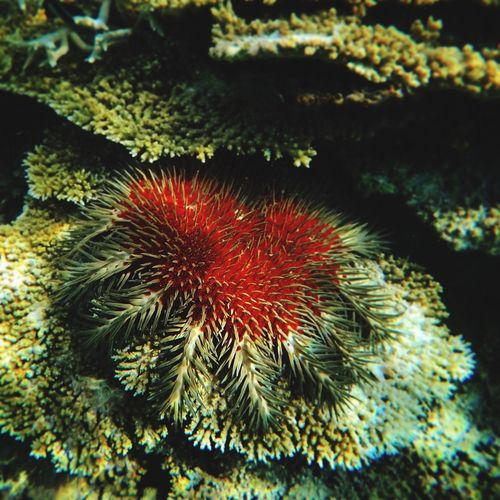 Sea Life Underwater Close-up UnderSea Sea Water Nature Beauty In Nature Red Coral Scuba Diving Ecosystem  Island Lifestyle