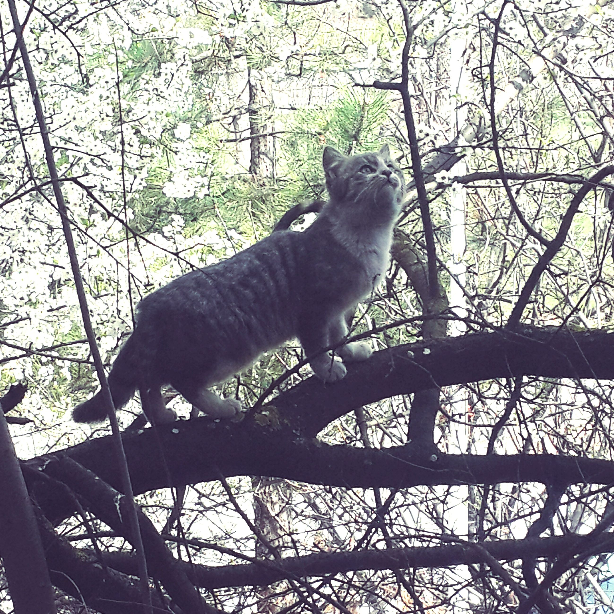 animal themes, one animal, mammal, domestic animals, tree, branch, pets, low angle view, full length, domestic cat, cat, vertebrate, side view, sitting, looking away, outdoors, no people, nature, zoology, day