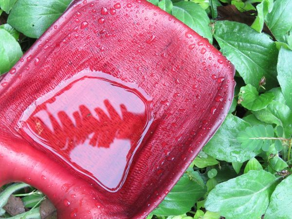 Leaf Food And Drink Close-up No People Green Color Food Red Day Freshness Healthy Eating Outdoors