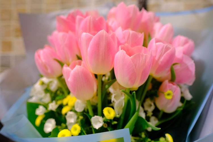 Close-up of pink tulips on table