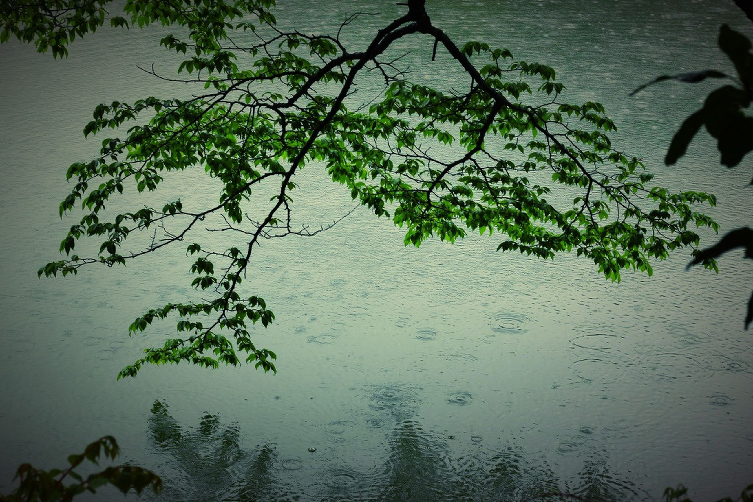 water, nature, lake, beauty in nature, waterfront, tree, outdoors, tranquility, plant, growth, no people, branch, scenics, day, sky
