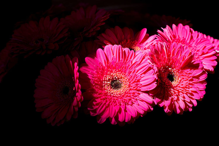 Backgrounds Bouquet Darkness And Light Flowers Gerbera Gerbera Daisy Holiday Love Nosegay Red Red Gerbera Roses Spring Valentine Valentine's Day  Valentinesday