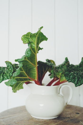 Close-up of rhubarb in mug on wooden table