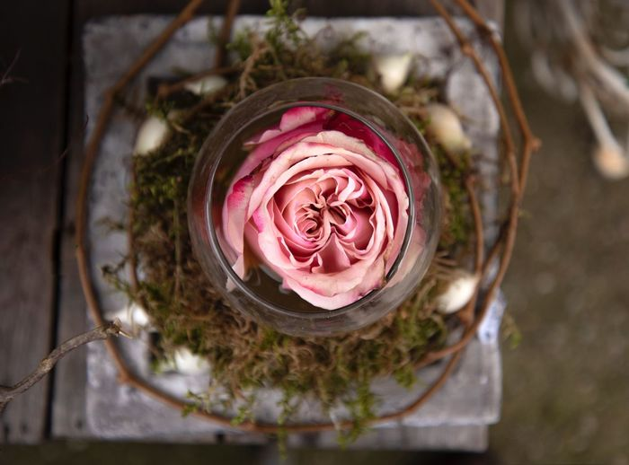 Close-up of pink rose in jar