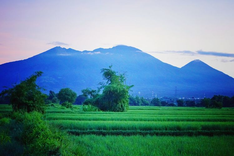 """""""Mt. banahaw, sariaya quezon Philippines. """" Eyeem Philippines Sony A6000 A6000photography A6000 Sony Alpha Eyeem Photography Landscape Mountain View Agriculture Field Rural Scene Nature Landscape Mountain Beauty In Nature Outdoors Scenics Sky No People Freshness Growth Tree Plant"""