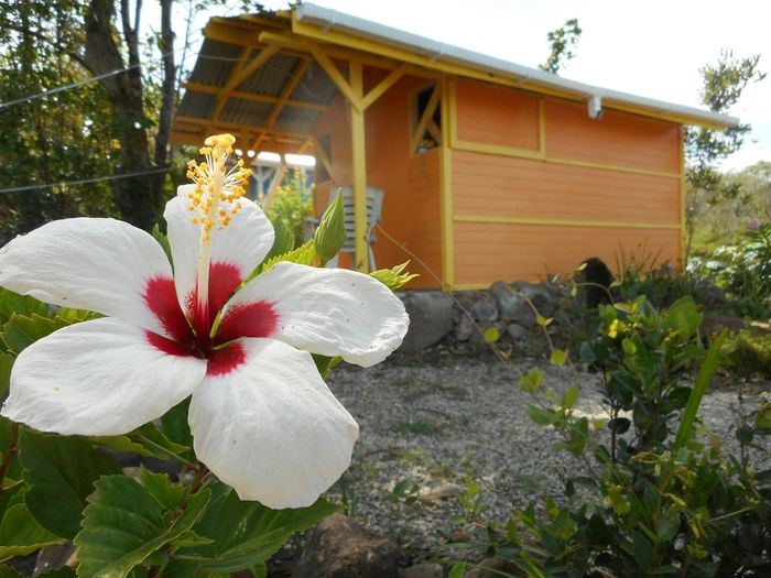 Cabin in Dominica Flower Cabin Eco Lodge Hibiscus Nature Dominica Caribbean Travel Garden Accommodation Accommodation For Travellers
