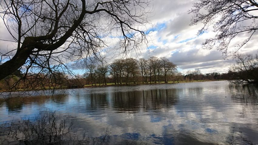 Reflection Water Cloud - Sky Tree Lake Nature Sky Outdoors Tranquility Beauty In Nature Scenics