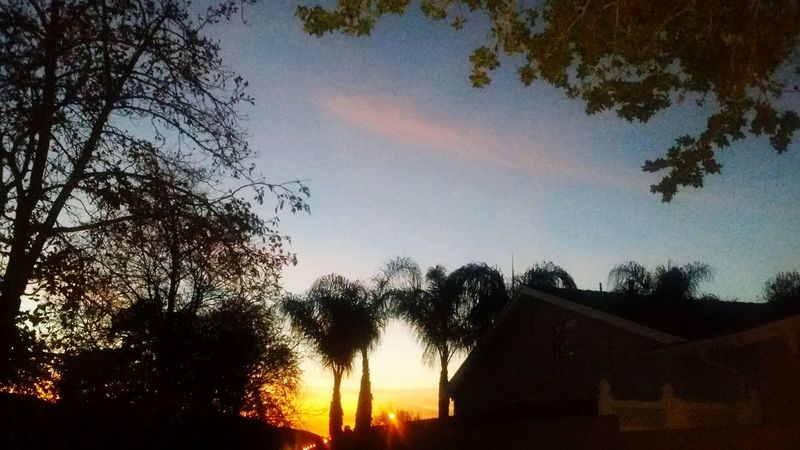 Was determined to post a new pic of this evening's skyline! :) Sunset Sincereties Trees Skylovers Sky And Trees Sky And City Scenic At The Park Eye Em Nature Lover Eyeemnaturelover