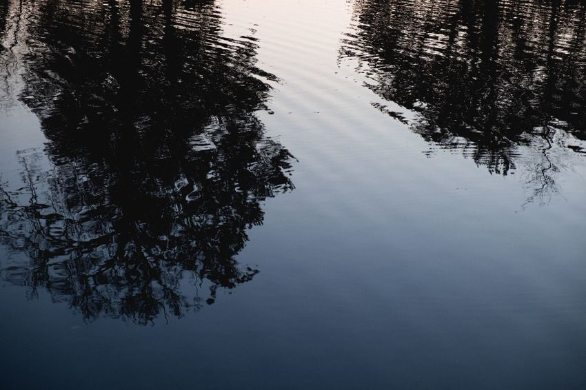 Reflection Tree Water Lake Nature No People Tranquil Scene Beauty In Nature Tranquility Outdoors Growth Day Scenics Sky Tenebrio.photos Fuji-xe2s Perspectives On Nature