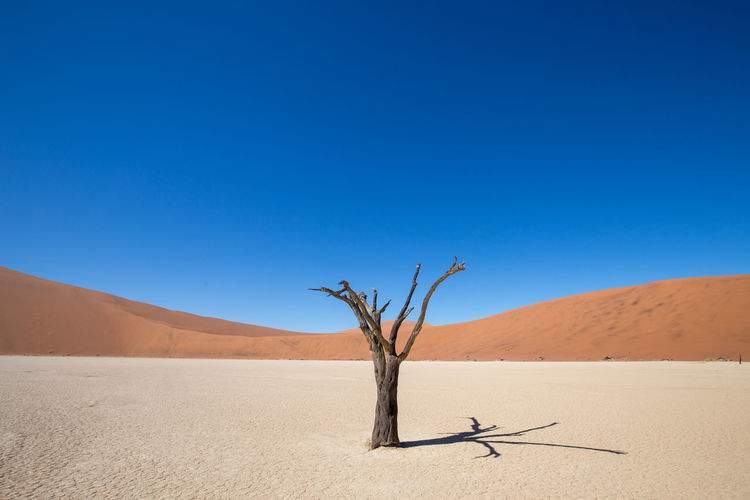 Arid Climate Beauty In Nature Blue Clear Sky Climate Copy Space Day Dead Plant Desert Environment Land Landscape Nature No People Non-urban Scene Outdoors Sand Sand Dune Scenics - Nature Sky Tranquil Scene Tranquility