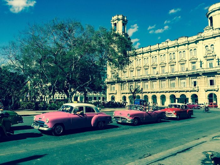 Building Exterior Car Tree Architecture Built Structure City Land Vehicle Transportation Mode Of Transport Sky No People History Road Outdoors Day Cuba Cuban Cars Cuba Collection Cuban Pink Trees Streetphotography Street Street Photography City Life