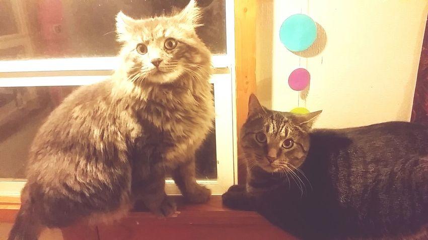 Cats 🐱 Pet Fliters Cute Pets
