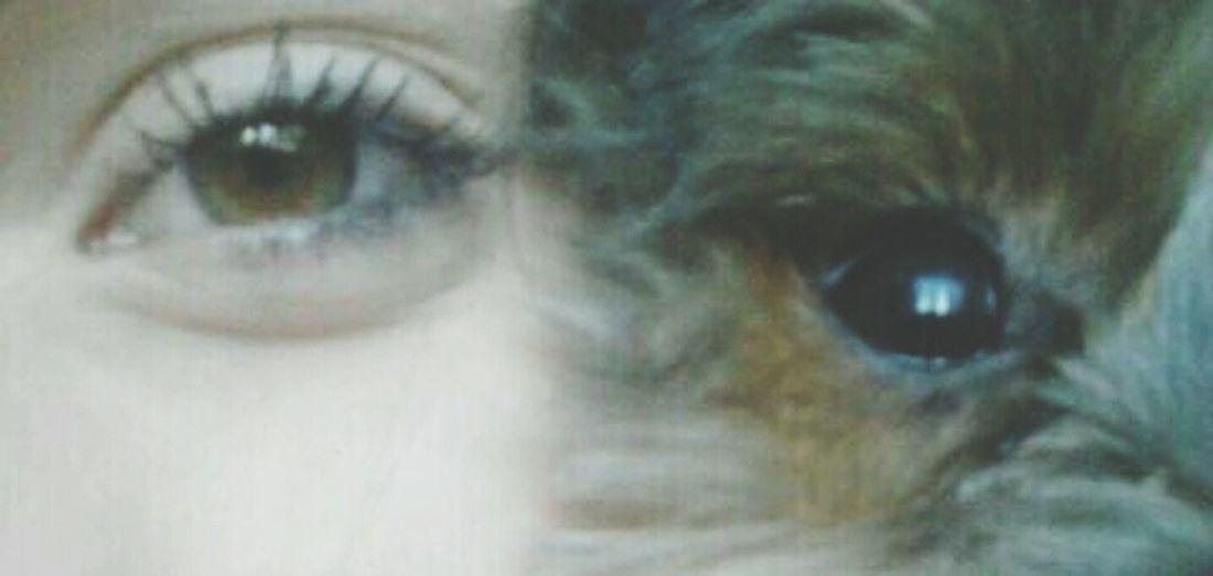 boyfriend ♥ Love Couple Likeforlikefollowforfollow Dog 😍♥