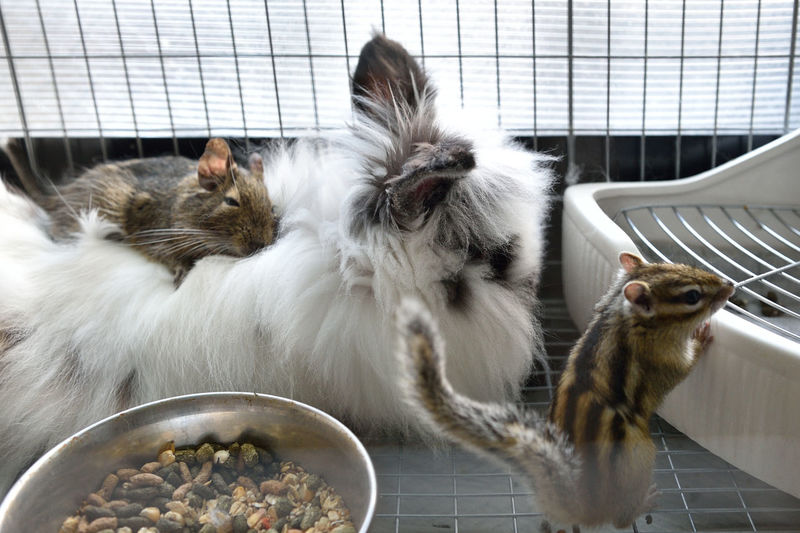 Close-up of chipmunks and rabbit in cage