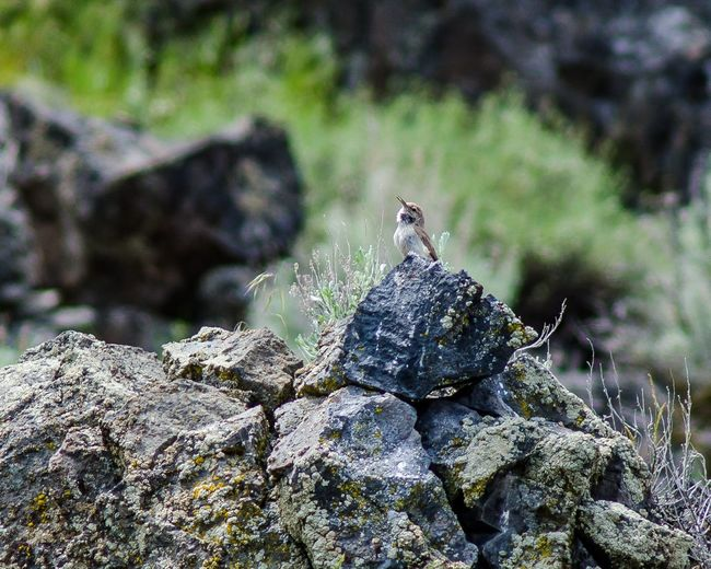 Close-up of squirrel perching on rock