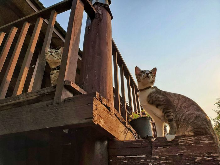 Low angle view of cat on building against sky