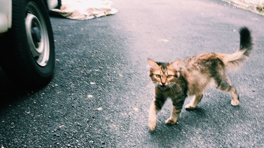 Low section of cat on street