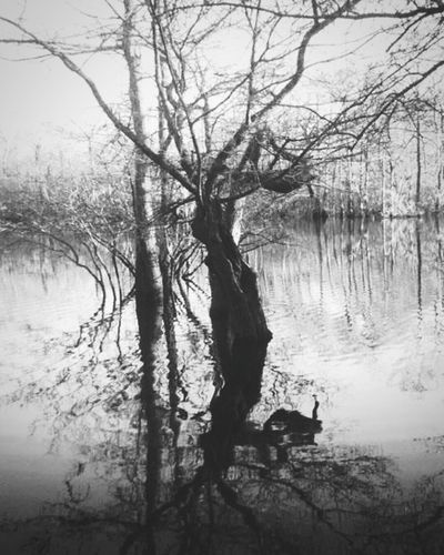 Perfectreflection Water Reflections Water Nature Nature Photography Trees Woods A Walk In The Woods Shades Of Grey