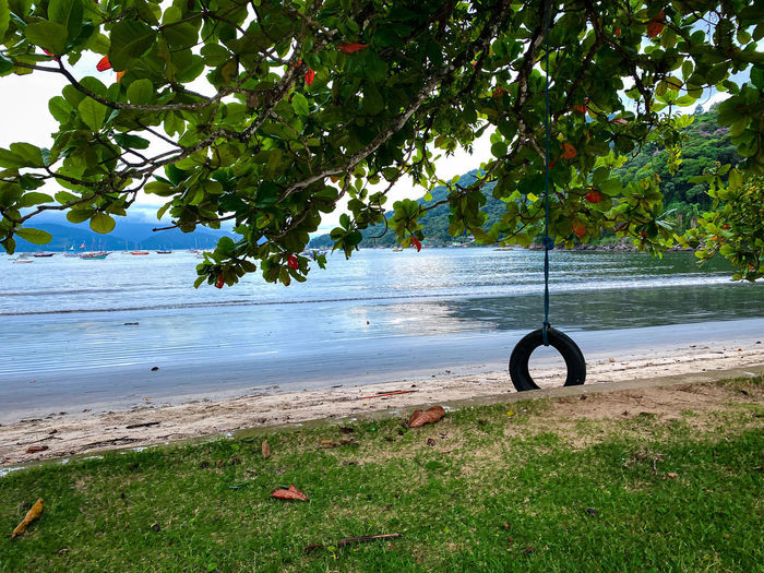 Bicycle hanging by tree on beach