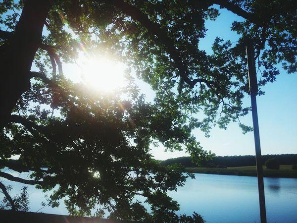 Random shot, taken with my Samsung Galaxy S2 Photography, Nature