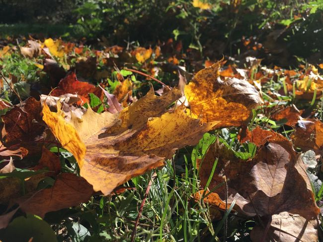 Autumn Beauty In Nature Close-up Fallen Grass Leaf Leaves Nature No People Outdoors Sunlight
