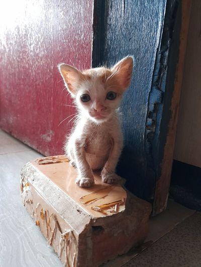 Portrait of kitten in box