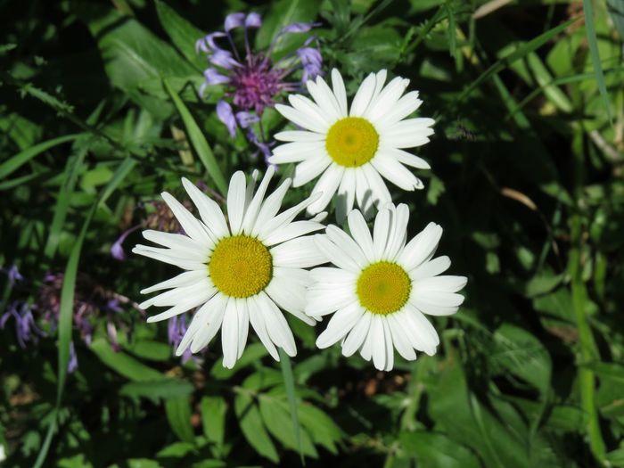 Botany Flower
