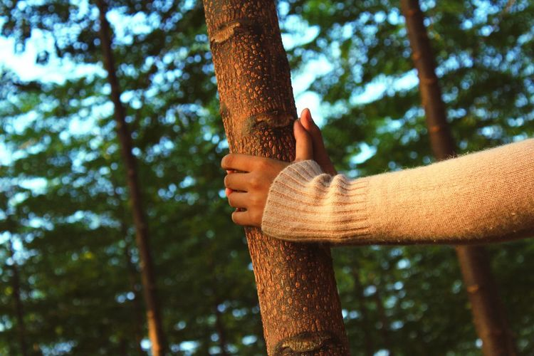 Cropped hands of woman holding tree
