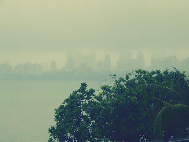 Fog Tree Tranquil Scene Beauty In Nature Nature Waterfront Outdoors Mist Seascape A Birds's Eye View Magic Mission A Birds Eye View MumbaiDiaries Monsoonseason Monsoonmagic Battle Of The Cities Dramatic Angles