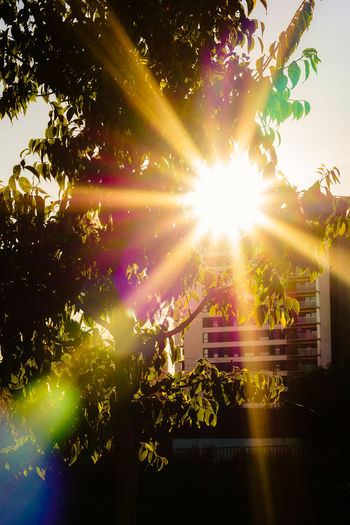 Nature No People Day Outdoors Sunlight Sun Plant Tree Lens Flare Sunbeam Sky Growth Sunny Bright Architecture Built Structure Beauty In Nature Leaf Building Exterior Illuminated Streaming Brightly Lit Solar Flare Capture Tomorrow