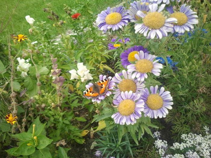 flieg mein Schmetterling flieg