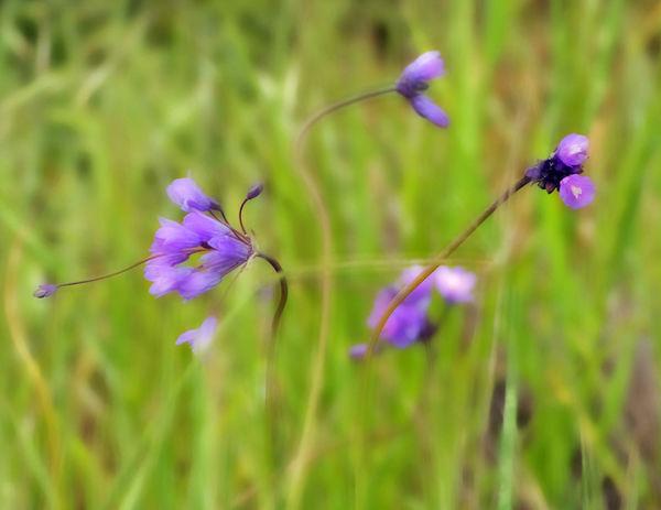 Flower Flower Head Happy Colors Outdoors Purple Wild Flowers Bloom