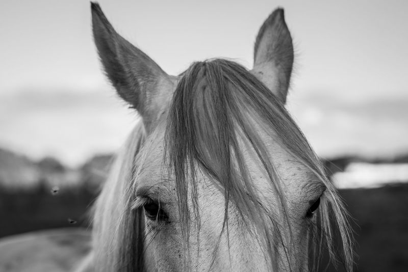 Horse Domestic Animals Animal Themes One Animal Mammal Mane Livestock Animal Head  Herbivorous Day Outdoors Focus On Foreground Close-up Paddock Portrait No People Sky Flies EyeEm Gallery EyeEm Best Shots Blackandwhite Feeding Animals Nature Nature_collection Nikon